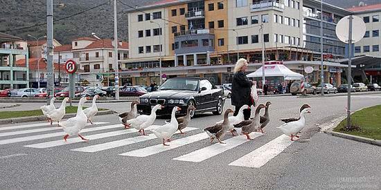 Вступило в силу ужесточение штрафа за непропуск пешеходов